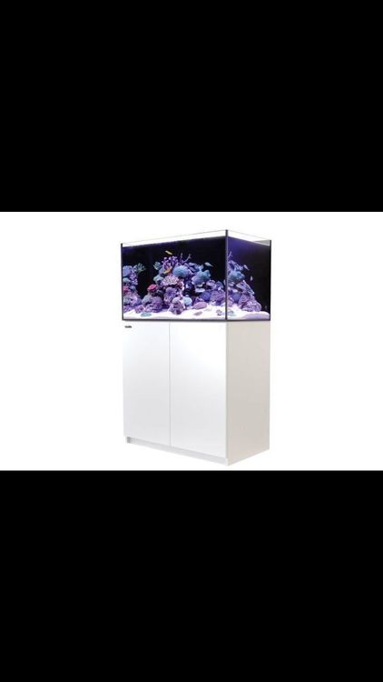 Red Sea Reefer 250 weiss