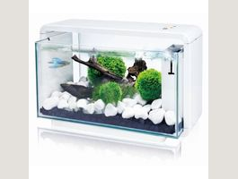 Amazon Aquarium blanc E 25 25l