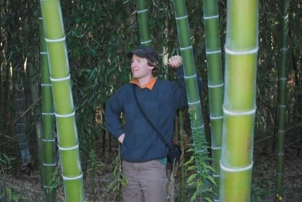 bamboo moso phyllostachys pubescens 100x in bremblens. Black Bedroom Furniture Sets. Home Design Ideas